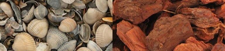 Boomschors en schelpen